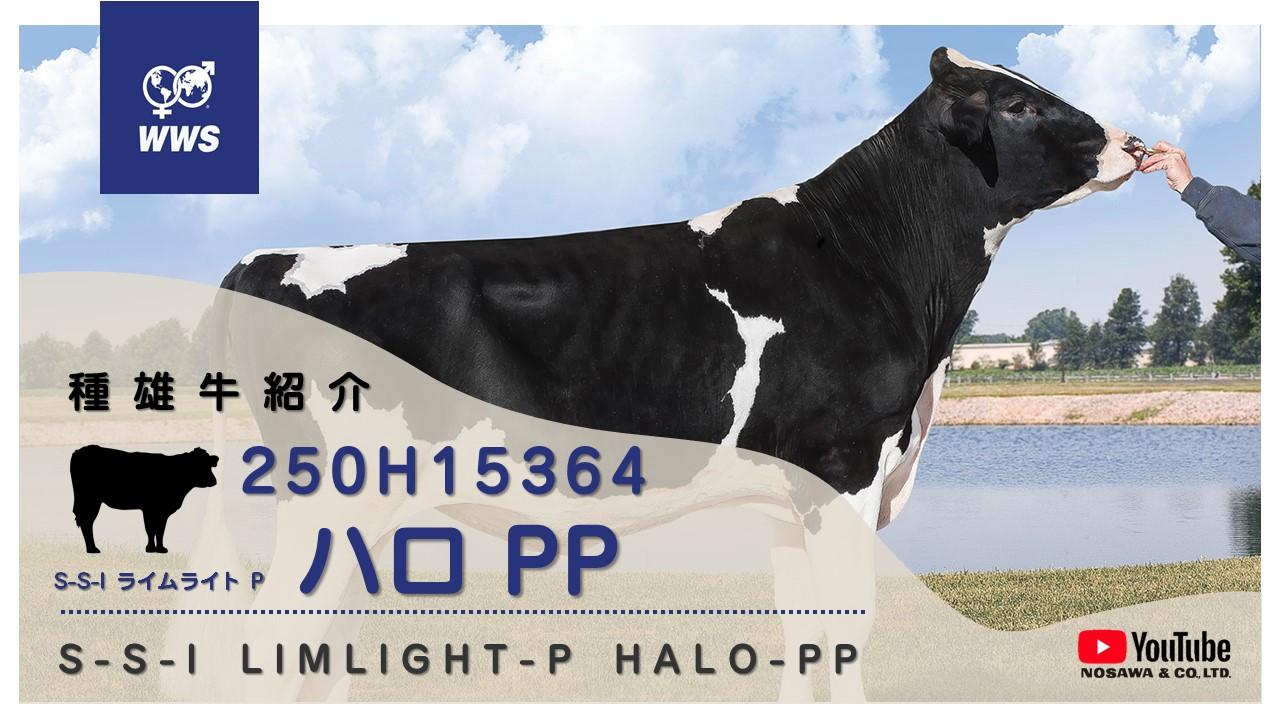 250H15364 ハロPP.jpg